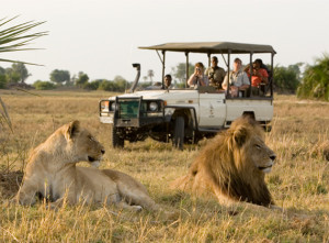 Safari em África